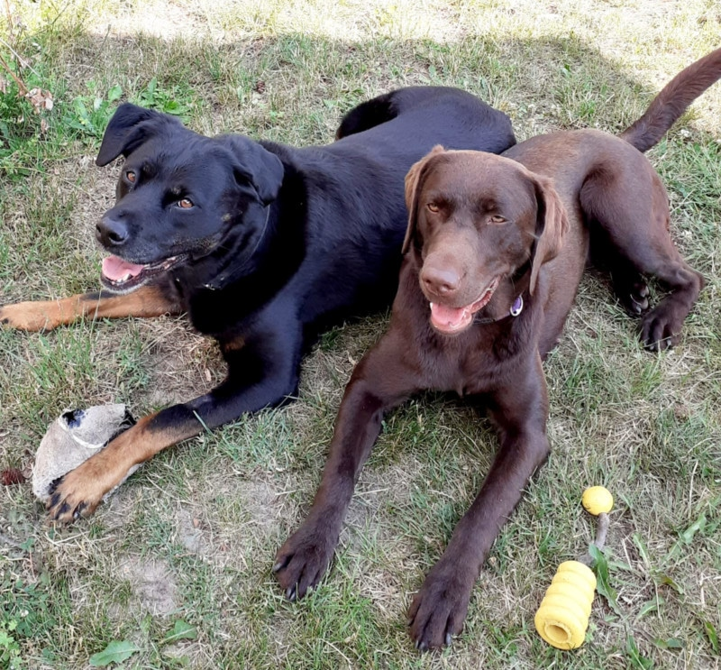 Therapeutisches Reiten Hannover Jolly Jumper Hunde