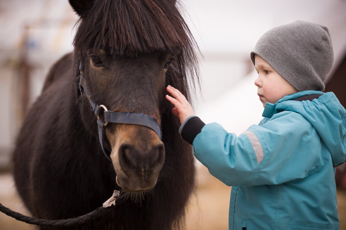 Therapeutisches Reiten Hannover Jolly Jumper Kleiner Junge streichelt Pferd