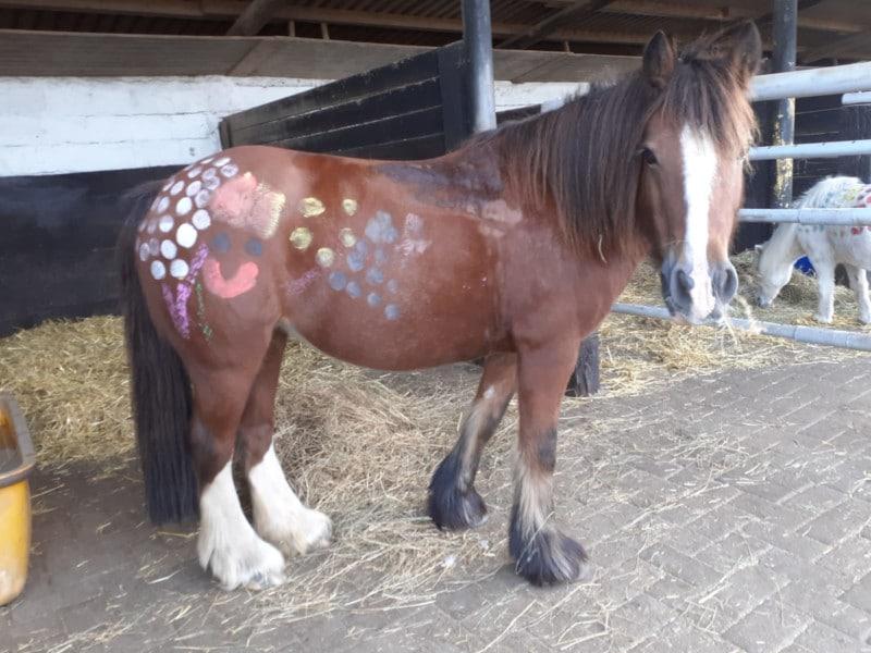 Therapeutisches Reiten Hannover Jolly Jumper Bemaltes Pferd